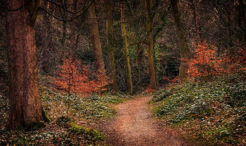 Forest Shadows-065.jpg