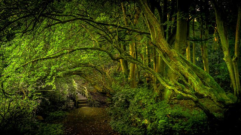 Forest Shadows-086.jpg