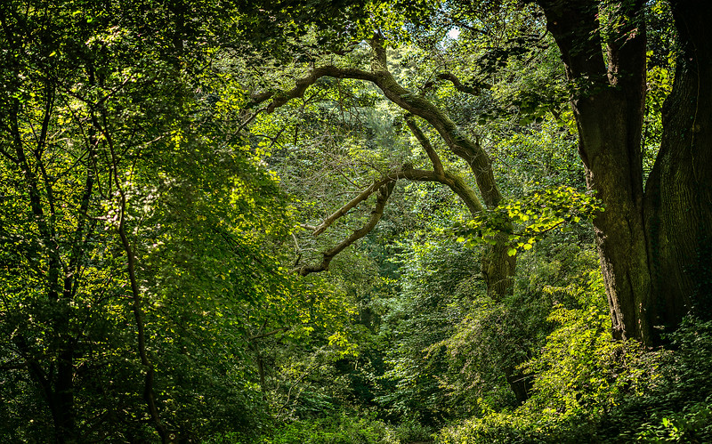 Forest Shadows-150.jpg