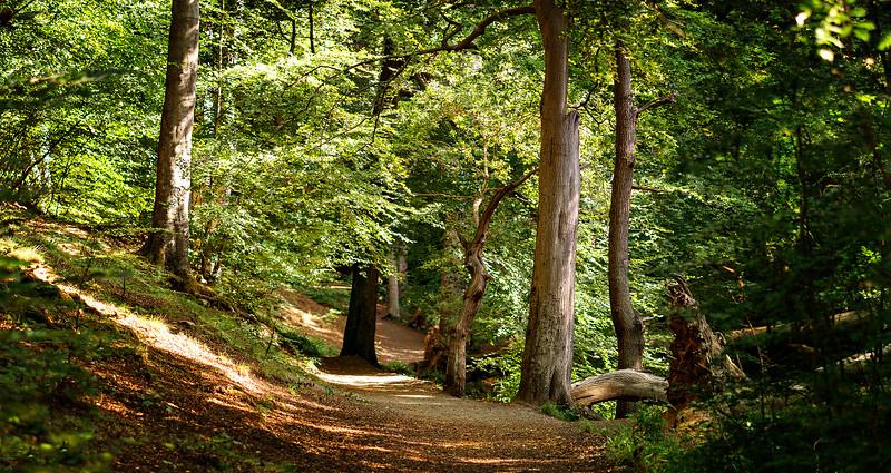 Forest Shadows-131.jpg