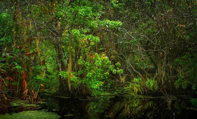 Forest Shadows-027.jpg