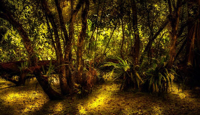 Forest Shadows-037.jpg