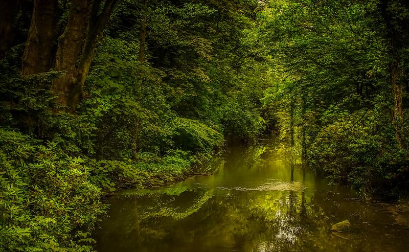 Forest Shadows-176.jpg
