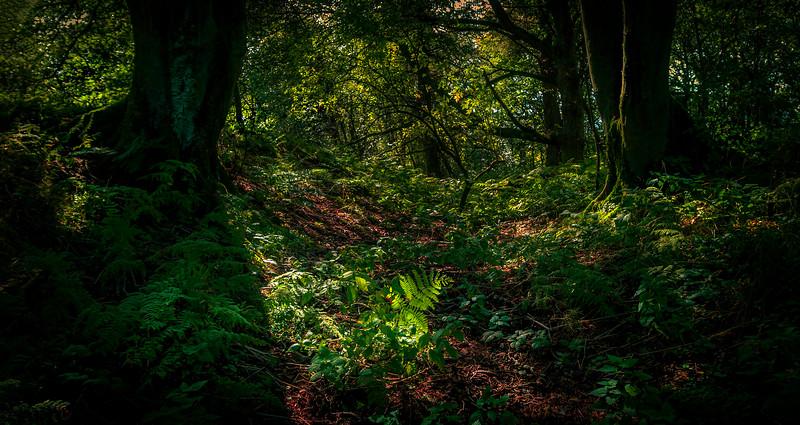 Forest Shadows-106.jpg