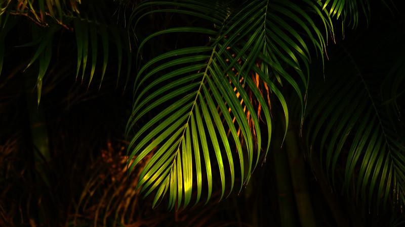 Forest Shadows-190.jpg