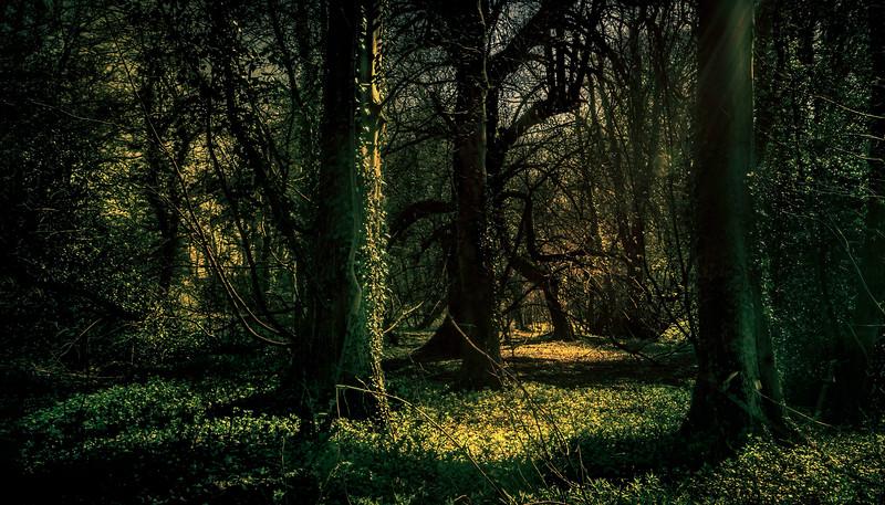 Forest Shadows-153.jpg