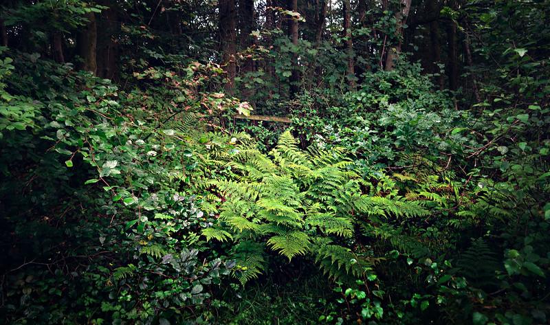 Forest Shadows-008.jpg
