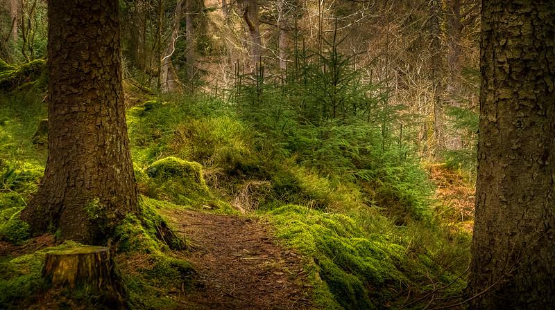 Forest Shadows-062.jpg