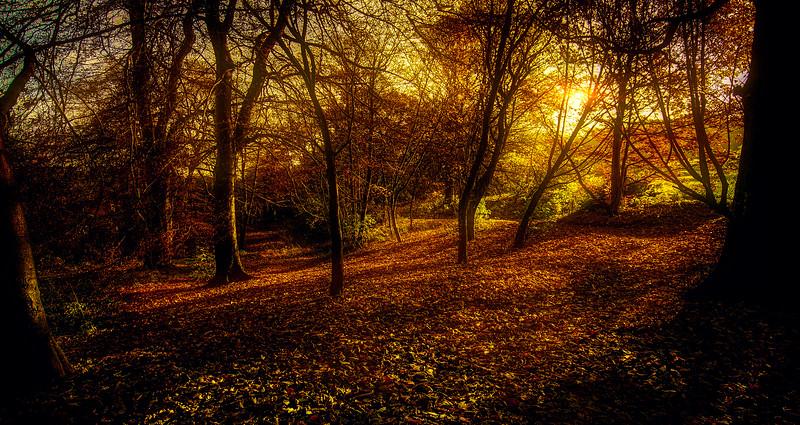 Forest Shadows-181.jpg