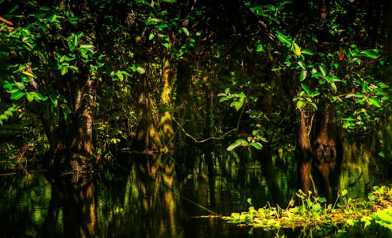 Forest Shadows-050.jpg