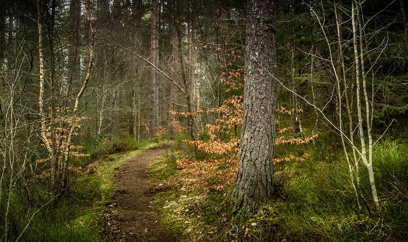 Forest Shadows-071.jpg