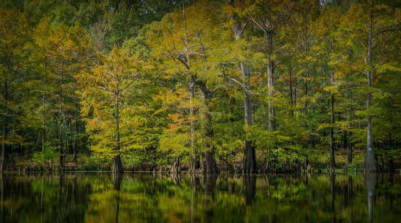 Forest Shadows-192.jpg