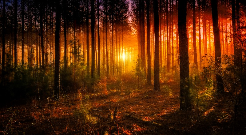 Forest Shadows-019.jpg