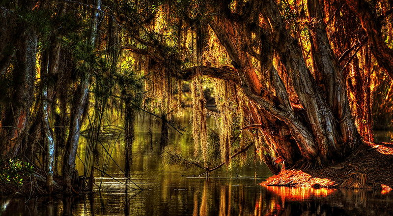 Everglades Paintography by Ray Bilcliff - www.trueportraits.com