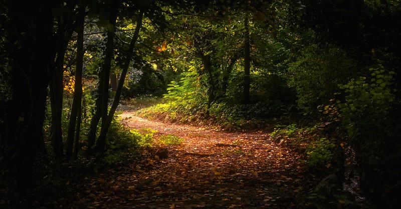 Forest Shadows-184.jpg