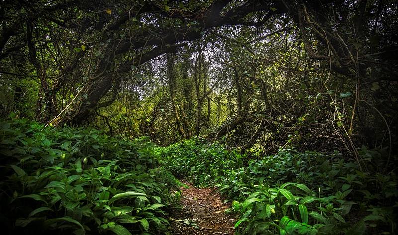 Forest Shadows-074.jpg
