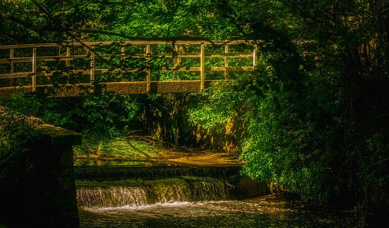 Forest Shadows-182.jpg