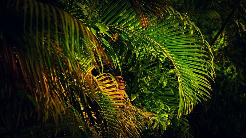 Forest Shadows-188.jpg