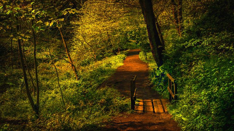 Forest Shadows-149.jpg