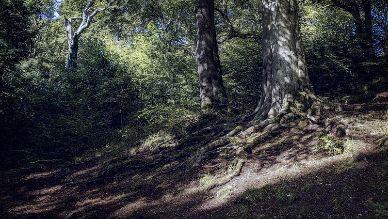 Forest Shadows-080.jpg