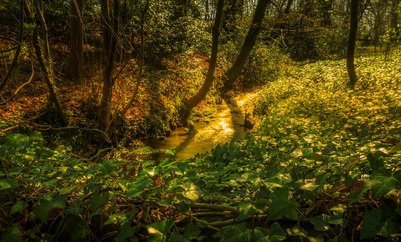 Forest Shadows-094.jpg