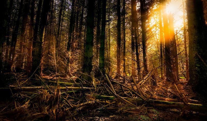 Forest Shadows-109.jpg