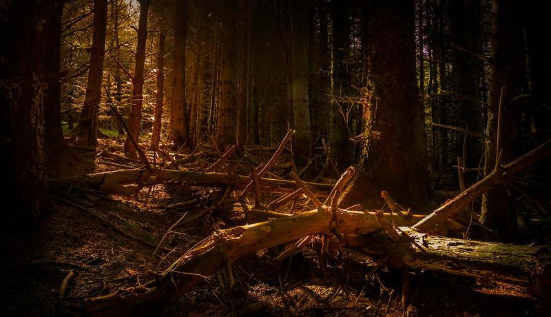Forest Shadows-108.jpg