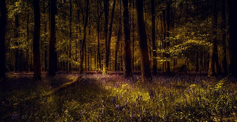 Forest Shadows-002.jpg