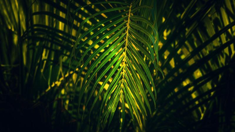 Forest Shadows-191.jpg