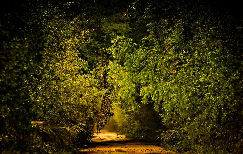 Forest Shadows-004.jpg