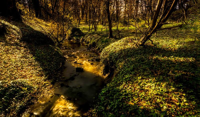 Forest Shadows-039.jpg