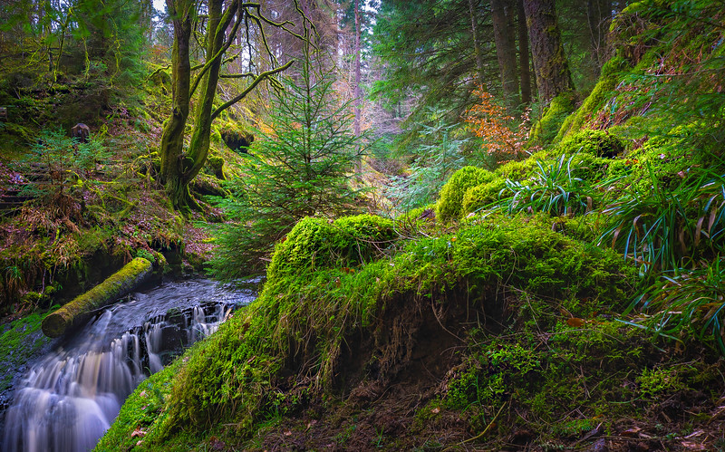 Forest Shadows-160.jpg