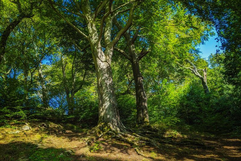 Forest Shadows-081.jpg