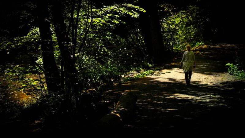 Forest Shadows-178.jpg
