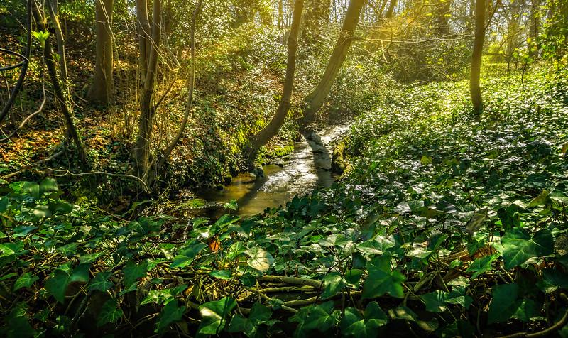 Forest Shadows-075.jpg