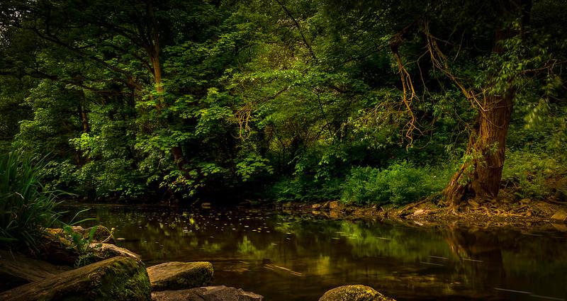 Forest Shadows-051.jpg