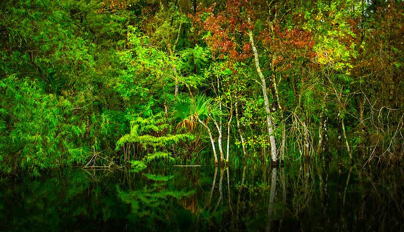 Forest Shadows-040.jpg