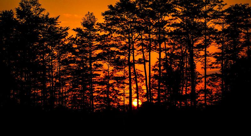 Forest Shadows-009.jpg