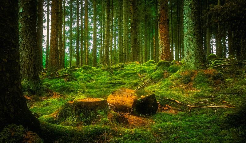 Forest Shadows-031.jpg