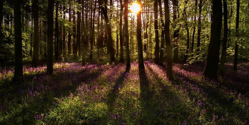 Forest Shadows-088.jpg