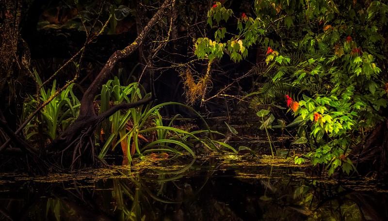 Forest Shadows-174.jpg