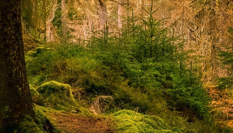 Forest Shadows-064.jpg