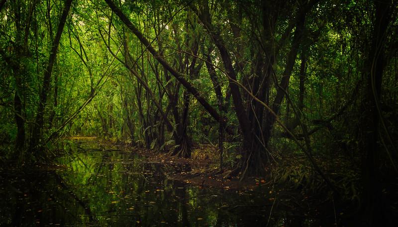 Forest Shadows-016.jpg