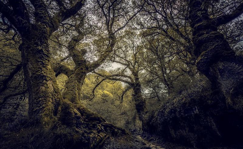 Forest Shadows-117.jpg