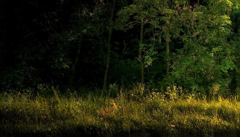 Forest Shadows-030.jpg