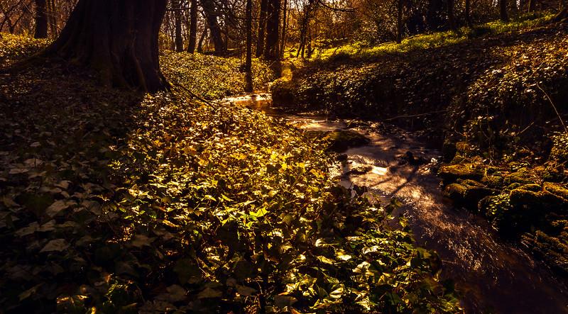 Forest Shadows-164.jpg