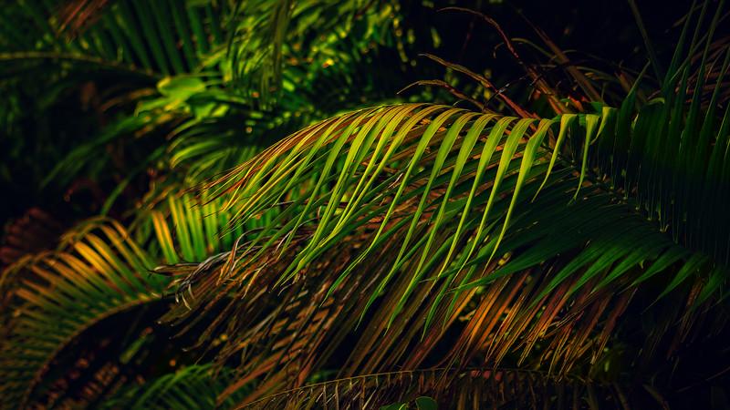 Forest Shadows-189.jpg