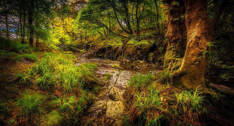 Forest Shadows-156.jpg