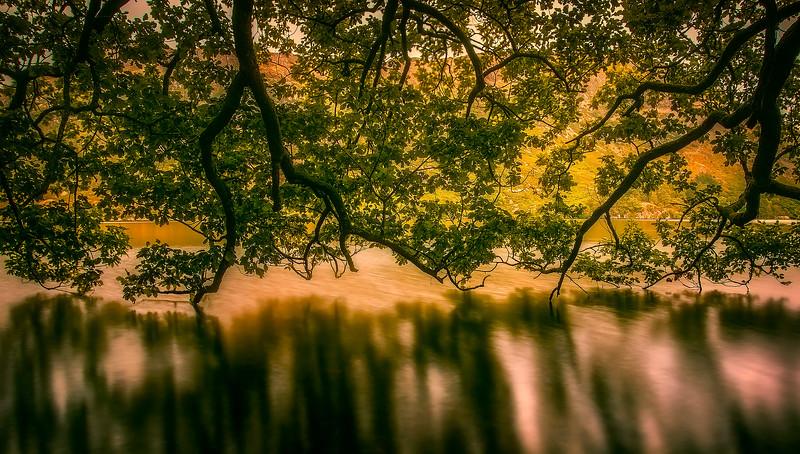 Forest Shadows-133.jpg
