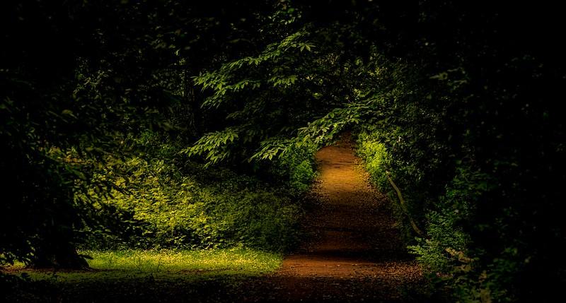 Forest Shadows-022.jpg